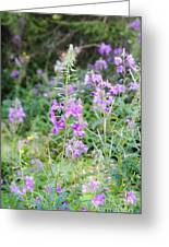 Alpine Wildflower Greeting Card