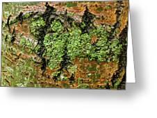 Aspen Bark After The Rain Greeting Card