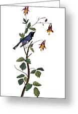 Audubon: Warbler, (1827-38) Greeting Card