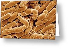 Bacillus Thuringiensis Bacteria Greeting Card
