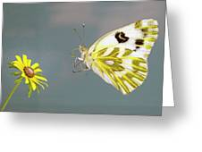 Becker's White Butterfly Greeting Card