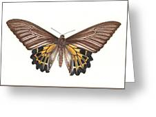 Birdwing Butterfly Greeting Card
