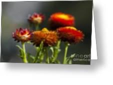 Blurred Seasonal Flower With Dark Background Greeting Card