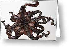 Cephalopod Greeting Card