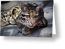 Clouded Leopard Greeting Card