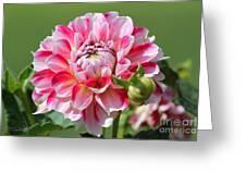 Dahlia Named Hawaii Greeting Card