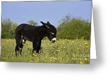 Donkey Foal Greeting Card