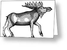Elk/moose Greeting Card