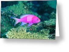 Fiji, Reef Scene Greeting Card