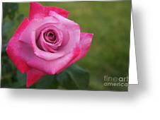 Flower Series Greeting Card