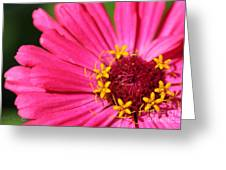 Fuchsia Pink Zinnia From The Whirlygig Mix Greeting Card