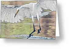 Great Egret Chase Greeting Card