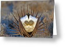 Greater Sage-grouse Greeting Card