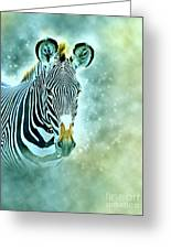 Grevys Zebra, Samburu, Kenya Greeting Card