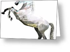 Horse Collection Greeting Card