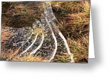 4. Ice Prismatics In Grass 1, Loch Tulla,  Greeting Card