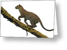 Leopard Panthera Pardus Climbing Greeting Card