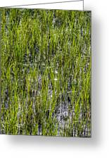 Nature Scenes Around Hunting Island South Carolina Greeting Card