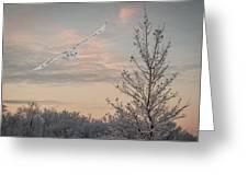 Snowy Owl Glide Greeting Card