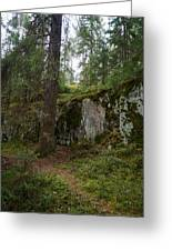 Old Forest In Kauppi Tampere Greeting Card