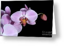 Pink Orchid IIi Greeting Card