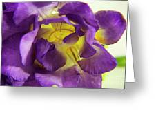 Purple Freesia Greeting Card