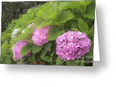 Purple Hydrangea At Rainy Garden In June, Japan Greeting Card