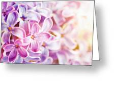 Purple Spring Lilac Flowers Blooming Close-up Greeting Card
