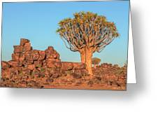 Quiver Tree Forest - Namibia Greeting Card