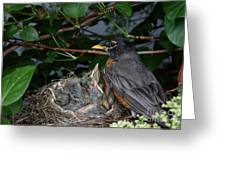 Robin Feeding Its Young Greeting Card
