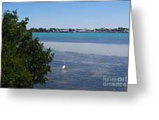 Sarasota Bay Greeting Card