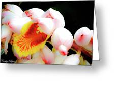 Shell Ginger Greeting Card