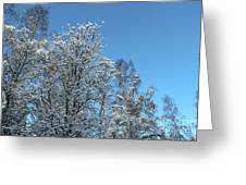 Snowy Trees Against A Blue Sky Greeting Card