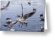 Stover Lake Greeting Card