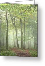 Stunning Colorful Vibrant Evocative Autumn Fall Foggy Forest Lan Greeting Card