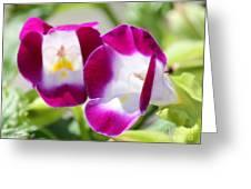 Torenia Named Kauai Magenta Greeting Card