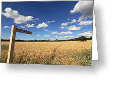 Tracks Through Golden Wheat Field Greeting Card