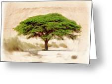 Umbrella Thorn Acacia Acacia Tortilis, Negev Israel Greeting Card