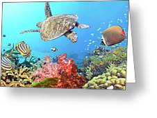 Underwater Panorama Greeting Card