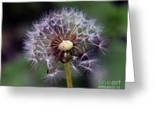 Weed Seeds Greeting Card