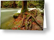 Whatcom Creek Greeting Card
