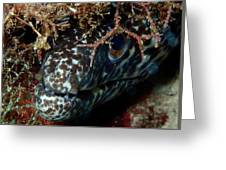 White Spotted Eel Greeting Card