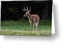 4 X 4 Buck Greeting Card