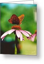 #416 14a Butterfly Fritillary, Coneflower Lunch Break Good Till The Last Drop Greeting Card