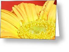 4173-001 Greeting Card