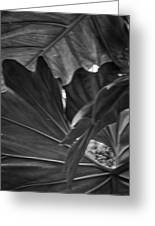 4327- Leaf Black And White Greeting Card