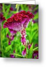 4390- Flower Greeting Card