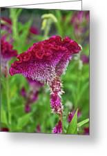 4393- Flower Greeting Card