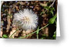 Australia - Blow And Make A Wish Flowers Greeting Card