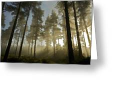 Oil Paintings Landscapes Greeting Card
